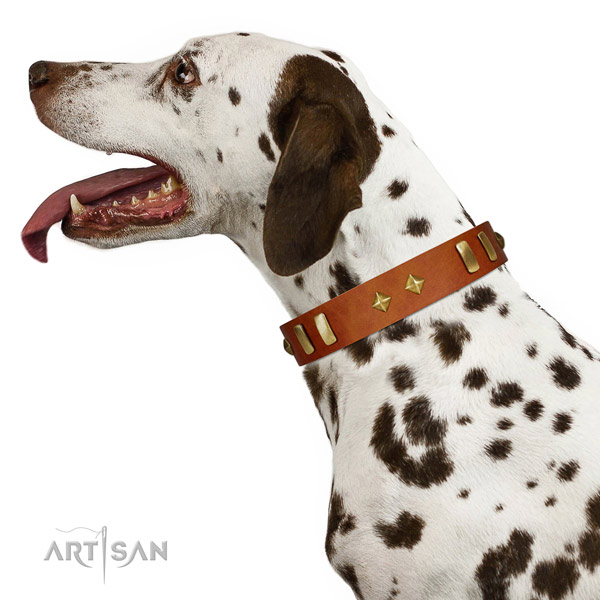 Matchless Quality Tan Leather Dalmatian Collar for Walking