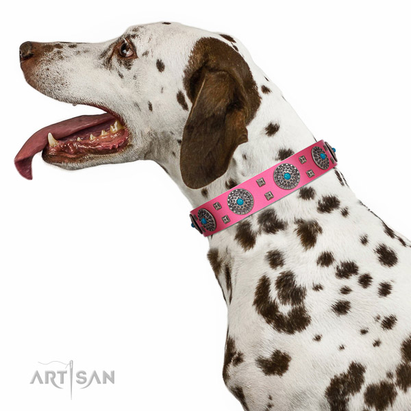 Royal quality dog collar for everyday walks