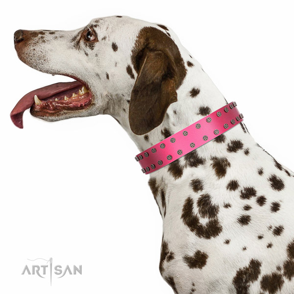 Extraordinary walking pink leather Dalmatian collar with
