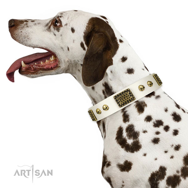 Dalmatian handy use dog collar of stylish leather