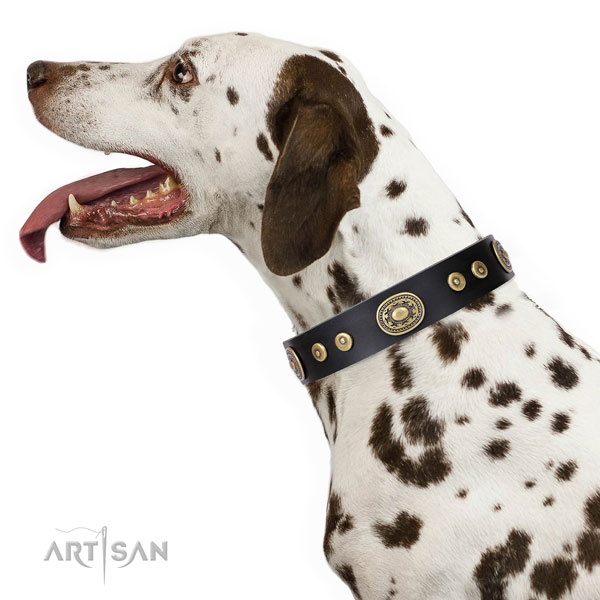 Dalmatian perfect fit genuine leather dog collar with decorations