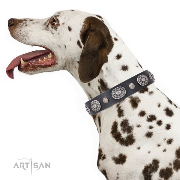 Dalmatian stylish design leather dog collar with adornments