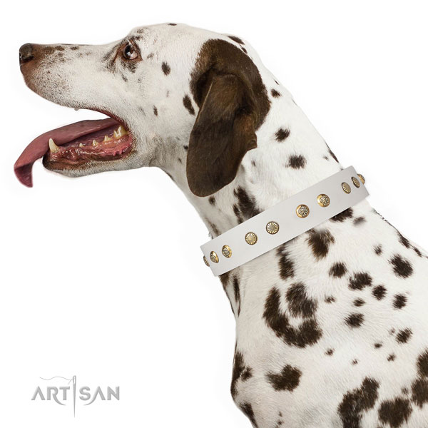 Dalmatian walking dog collar of remarkable quality natural leather