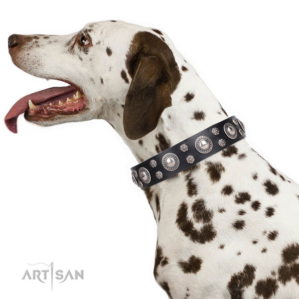 Dalmatian top quality natural genuine leather dog collar with embellishments
