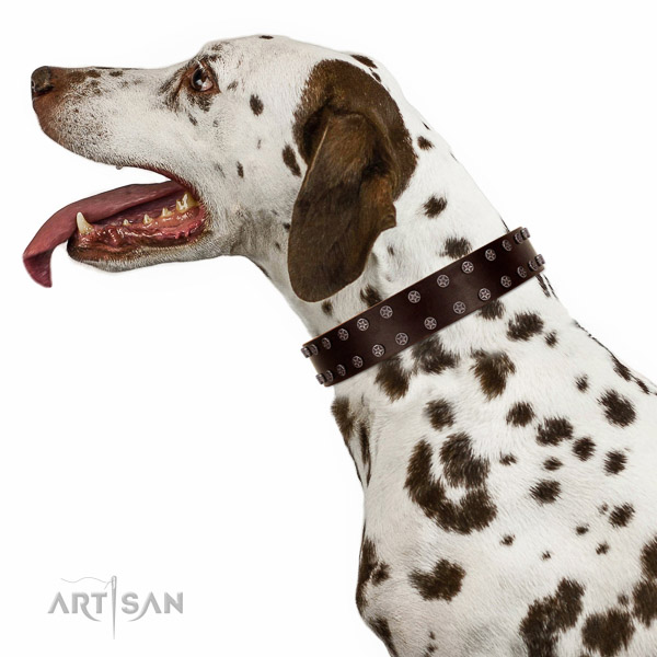 Comfortable leather Dalmatian collar of selected genuine leather
