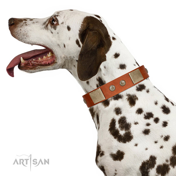 Adorned Full Grain Leather Dog Collar with Plates and Studs