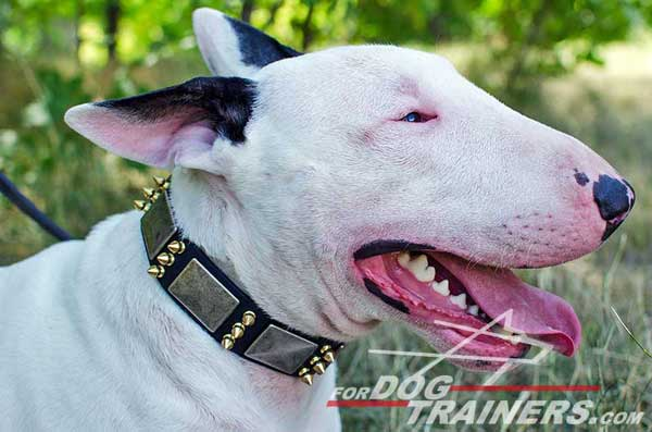 Leather Dog Collar for Bull Terrier