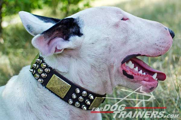 Decorated Bull Terrier Collar for Walking