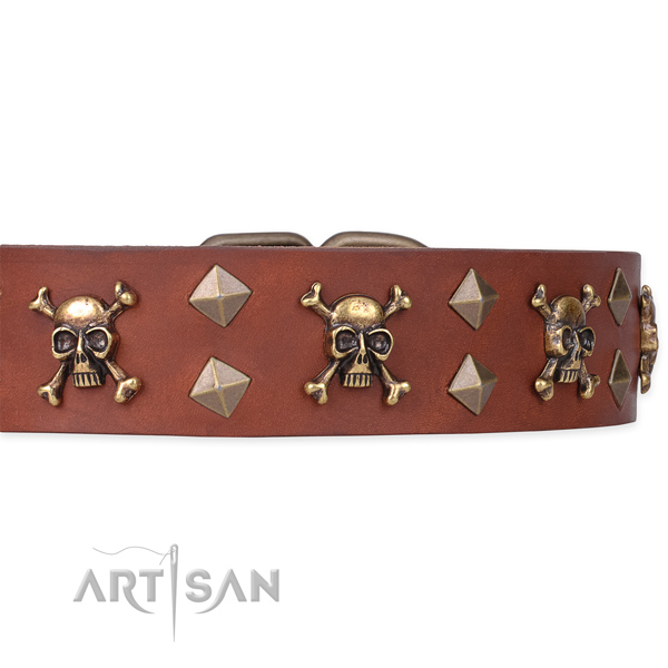 Brass Decor on Tan Dog Collar