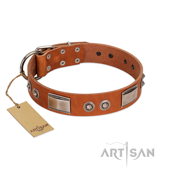 Exquisite Tan Leather Dog Collar with Brooches and Plates