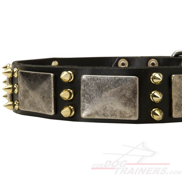 Corrosion Resistant Spikes and Plates on Strong Leather Cane Corso Collar