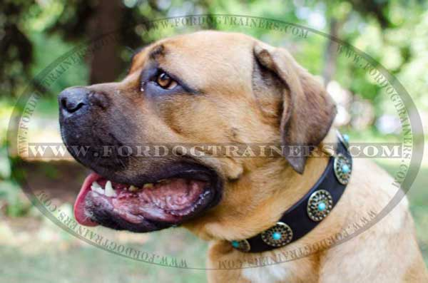 Decorated Cane Corso Collar with Circles