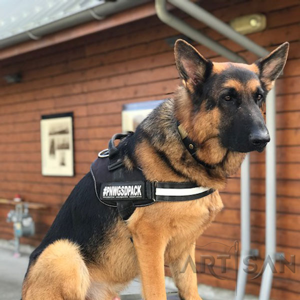 Perfect Luke in Stylish Leather German Shepherd Collar