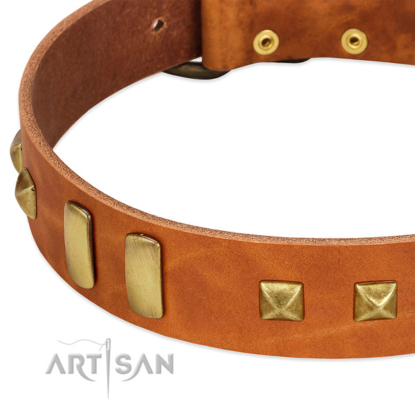 Tan leather dog collar with riveted plates and pyramids