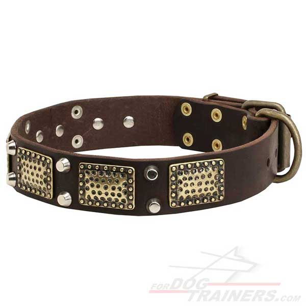 Leather dog collar with vintage brass plates and nickel studs
