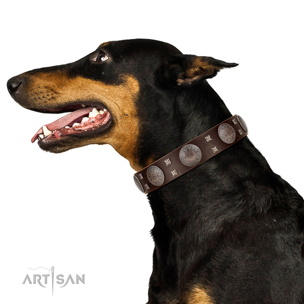 Extraordinary walking brown leather Doberman collar with cool decorations