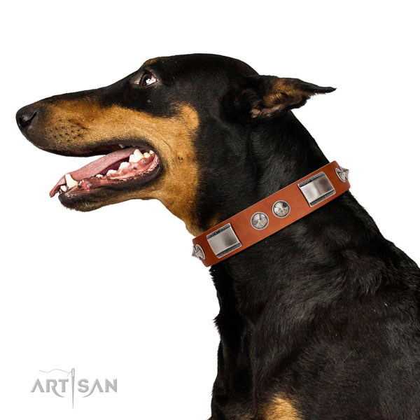 Extraordinary walking leather Doberman collar with chic decorations