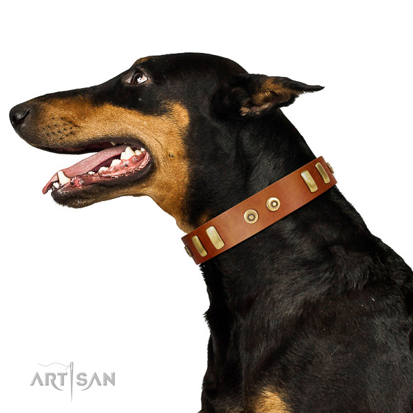Tan leather Doberman collar for cool daily look