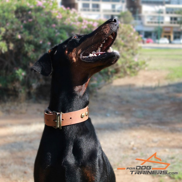 Tan Leather Doberman Collar with Old Bronze Look Fittings