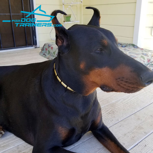 Walk Your Doberman Safely with Narrow Leather Dog Collar