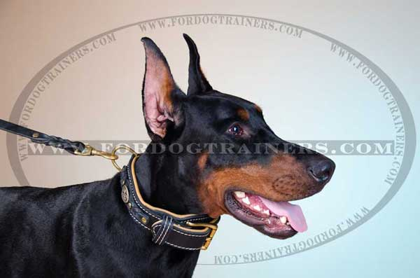 Doberman Collar Braided Strap