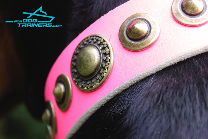 Pink Leather Dog Collar with Riveted Decor