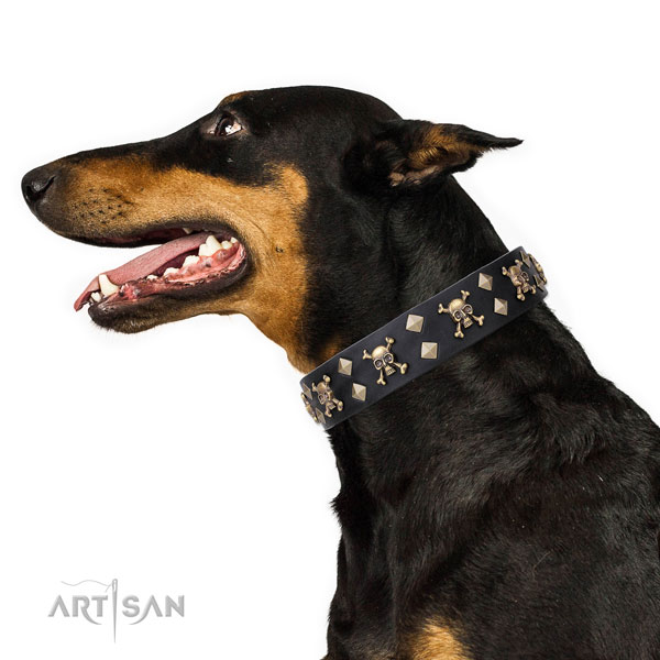 Doberman comfortable full grain genuine leather dog collar with adornments
