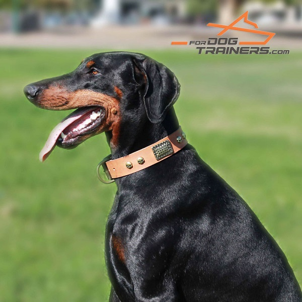 Exquisite Leather Doberman Collar for Raven