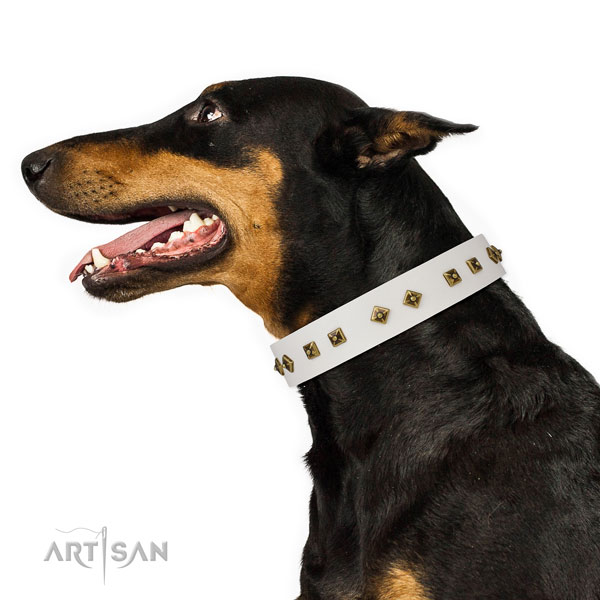 Doberman fancy walking dog collar of extraordinary quality natural leather