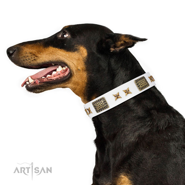Doberman fancy walking dog collar of stylish leather