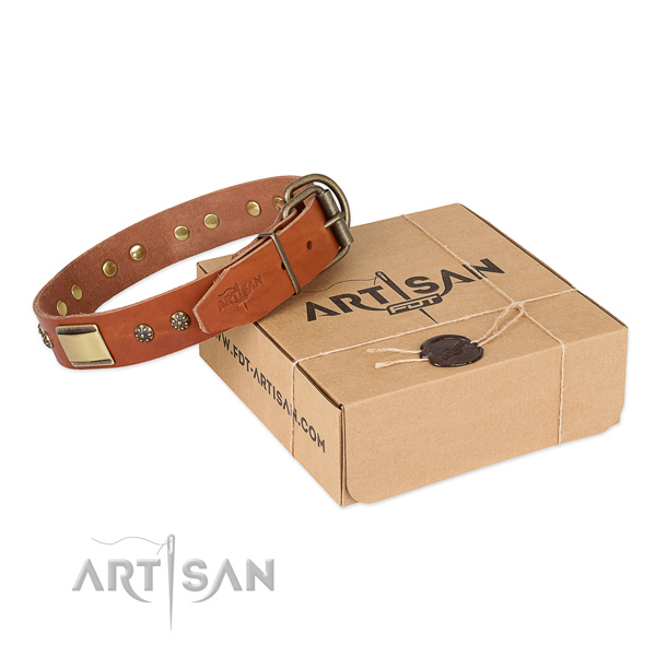 Tan Top Quality Dog Collar of Incredible Design