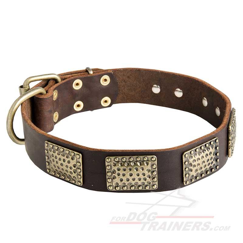 Dog harness dog collar dog leash dog muzzle dog training