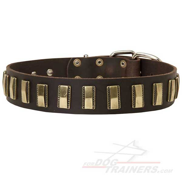 Leather Dog Collar Decorated with Designer Brass Vertical Plates