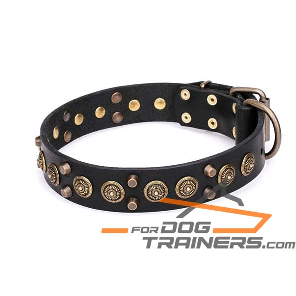 Designer Leather Dog Collar with Brass Studs