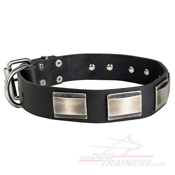 Decorated Leather Dog Collar Nickel Plated