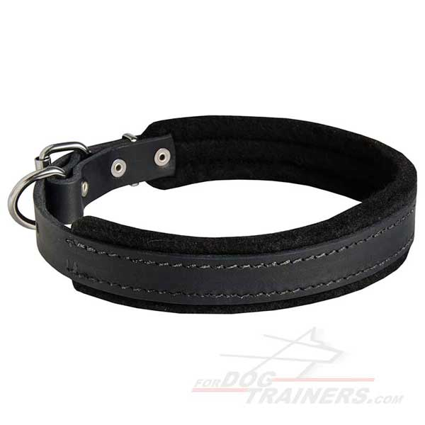 Leather Padded Dog Collar Carefully Stitched