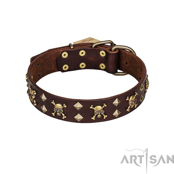 Brown Dog Collar with Brass Plated Fittings