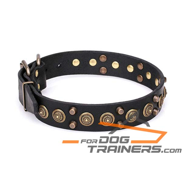 Royal Design Dog Collar with Golden-Like Decor