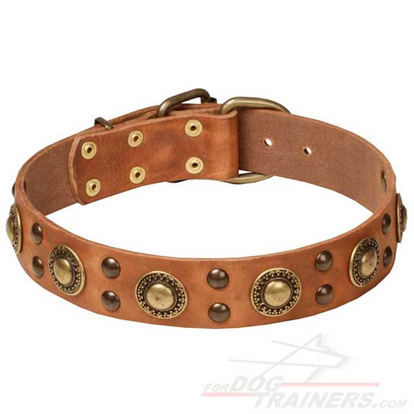 Easy Walking Studded Leather Dog Collar