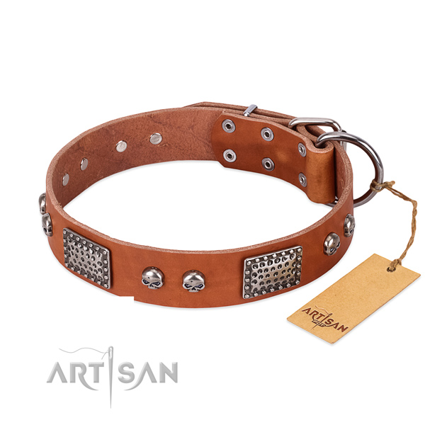 Tan Dog Collar with Chrome Plated Fittings