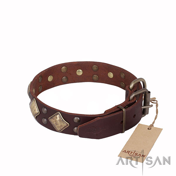 Brown Leather Dog Collar with Nice Hardware