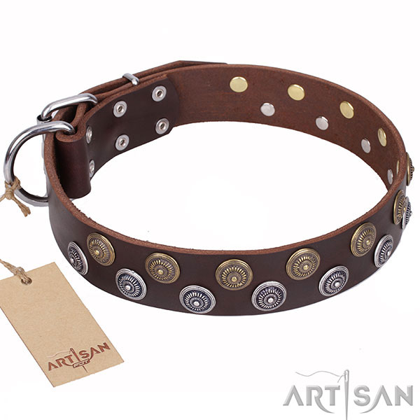 Walking Dog Collar of Natural Brown Leather
