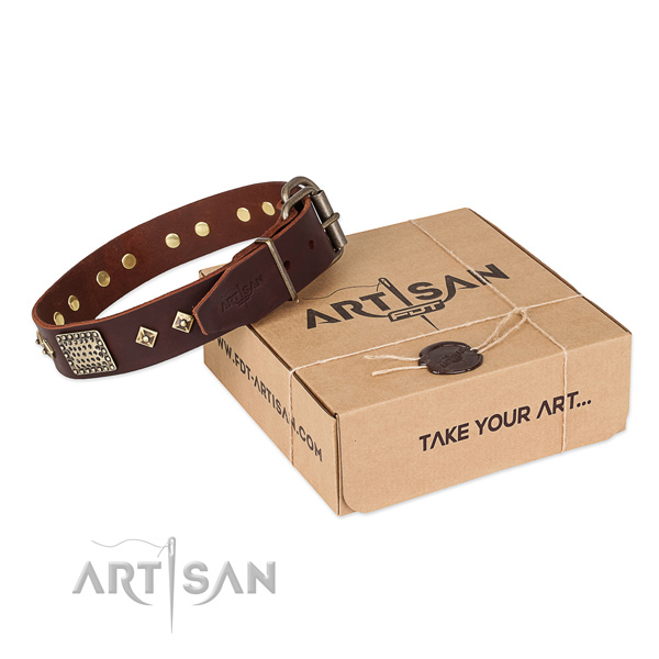 Stylish Brown Leather Dog Collar with Plates and Circles