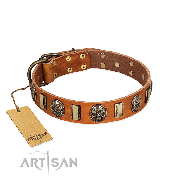 High Quality Leather Dog Collar with Goldish Adornments