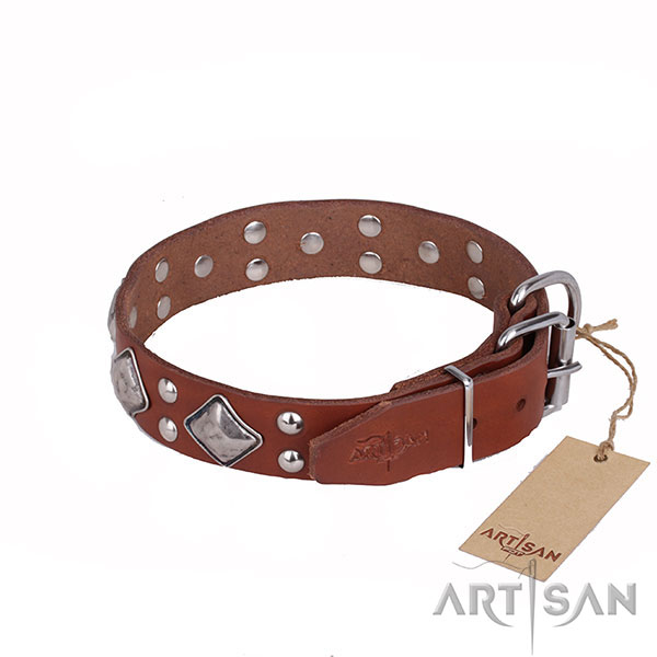 Tan Leather Dog Collar with Polished Fittings