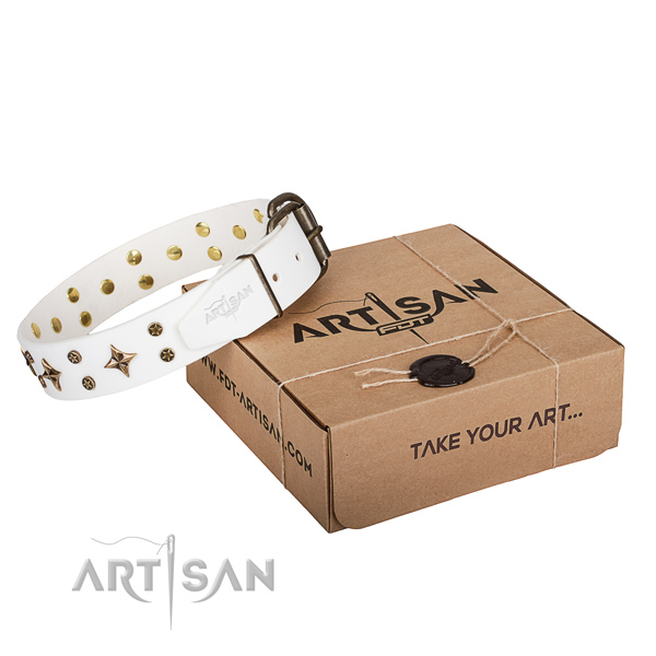 Stylish Dog Collar with Gold-Like Decor