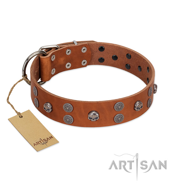 Unique Leather Dog Collar for Daily Comfortable