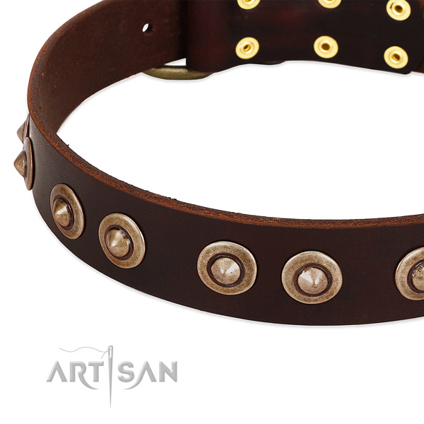 Wonderful brown leather dog collar with studs