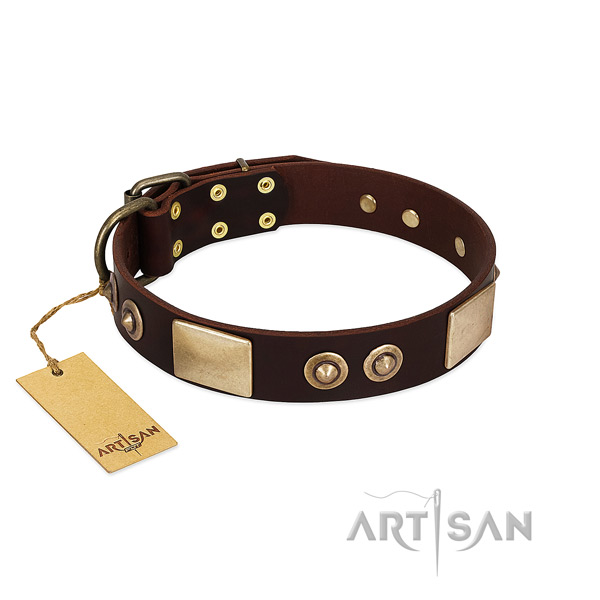 Brown leather dog collar adorned with plates and studs