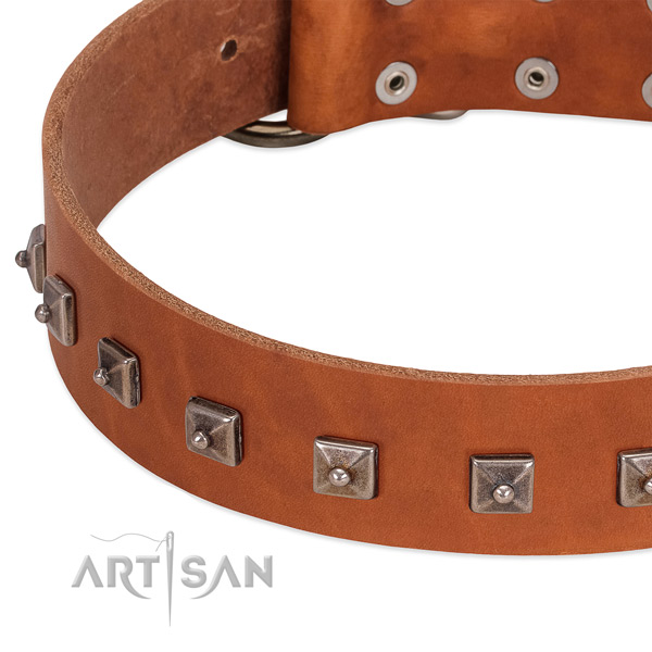 Adorned leather dog collar with chrome-plated steel studs